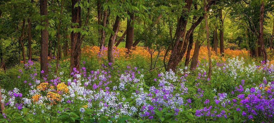Wildflowers Panorama Photograph