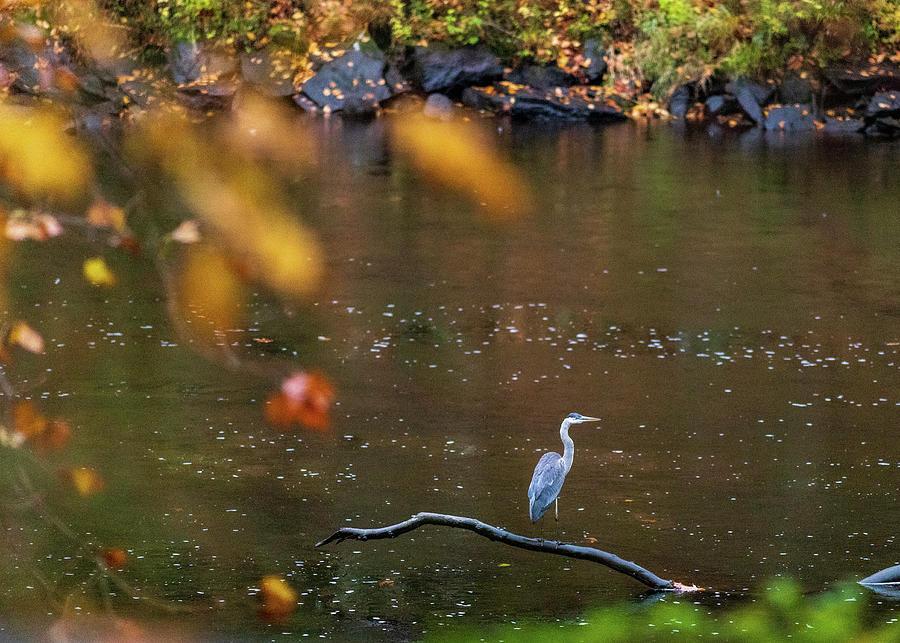Wildlife Photography - Birds by Amelia Pearn