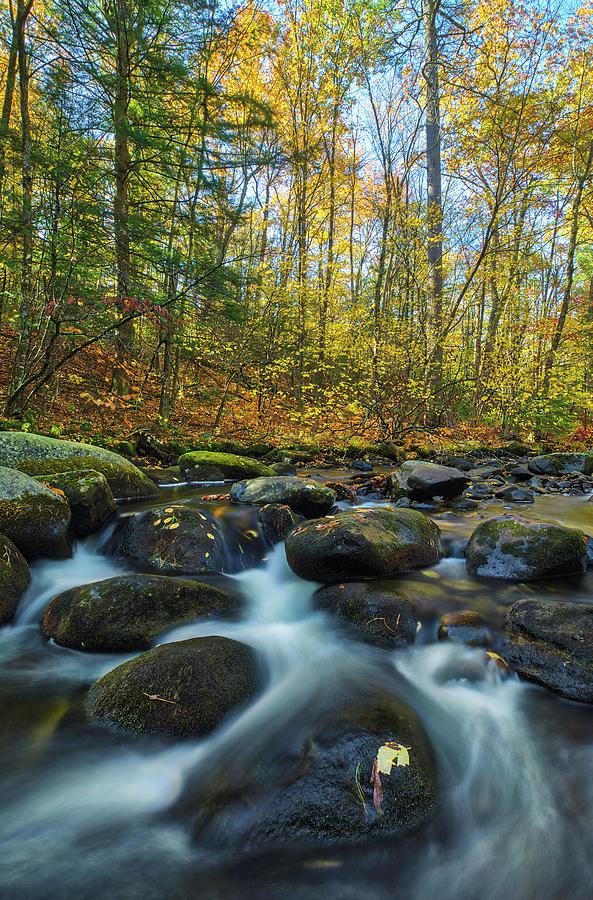 Willard Brook State Forest by Juergen Roth