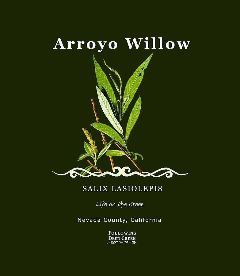 Willow by Lisa Redfern