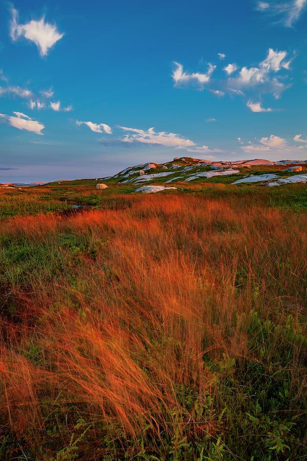 Wind-tossed Coastal Wilderness Grasses At Sunset by Irwin Barrett