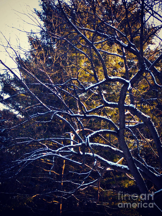 Nature Photograph - Winter-fold Branches by Frank J Casella