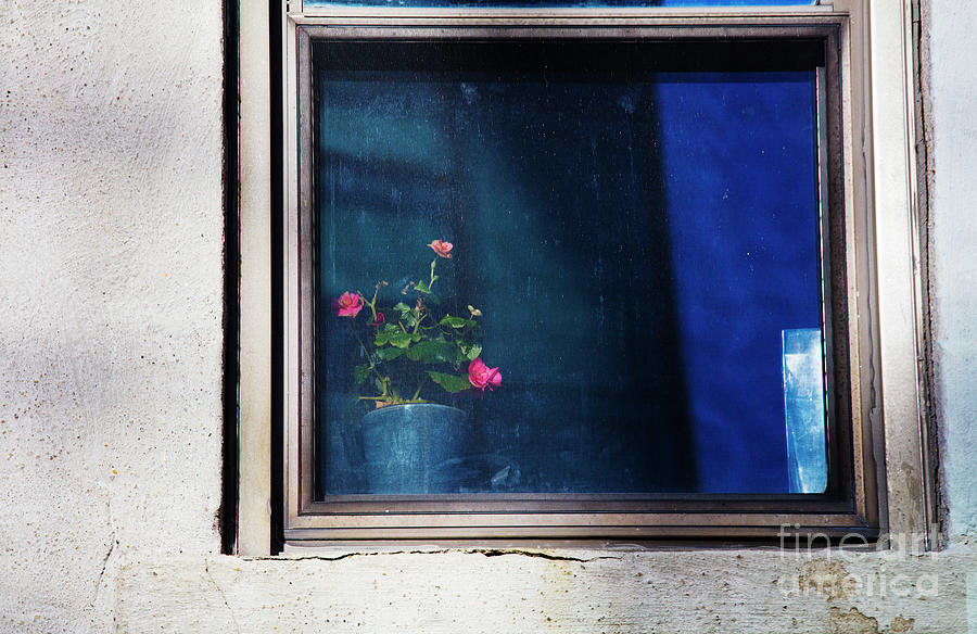 Window Photograph - Window And Roses by Felix Lai