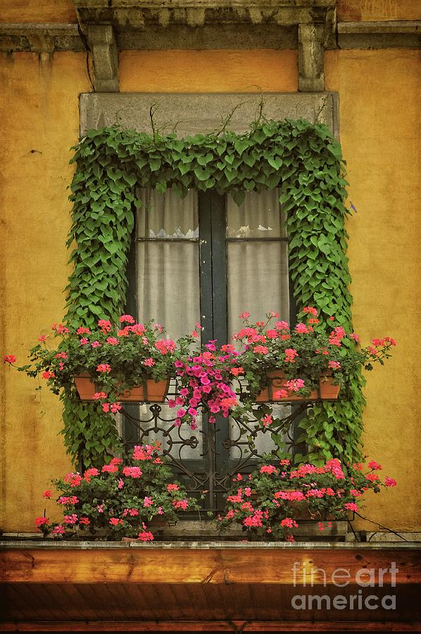 Window With Ivy And Flowers - Spain Photograph