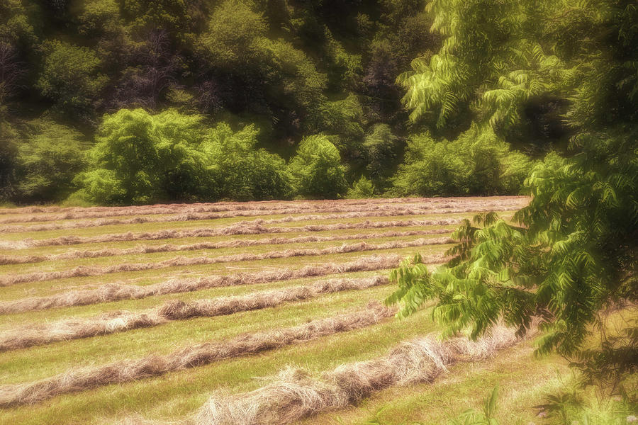 Windrows 2 Photograph
