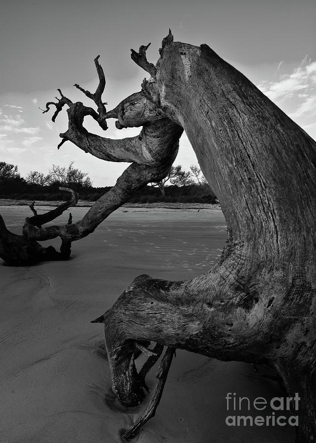 Beaches Photograph - Windswept driftwood tree on flat beach by Steven Norris