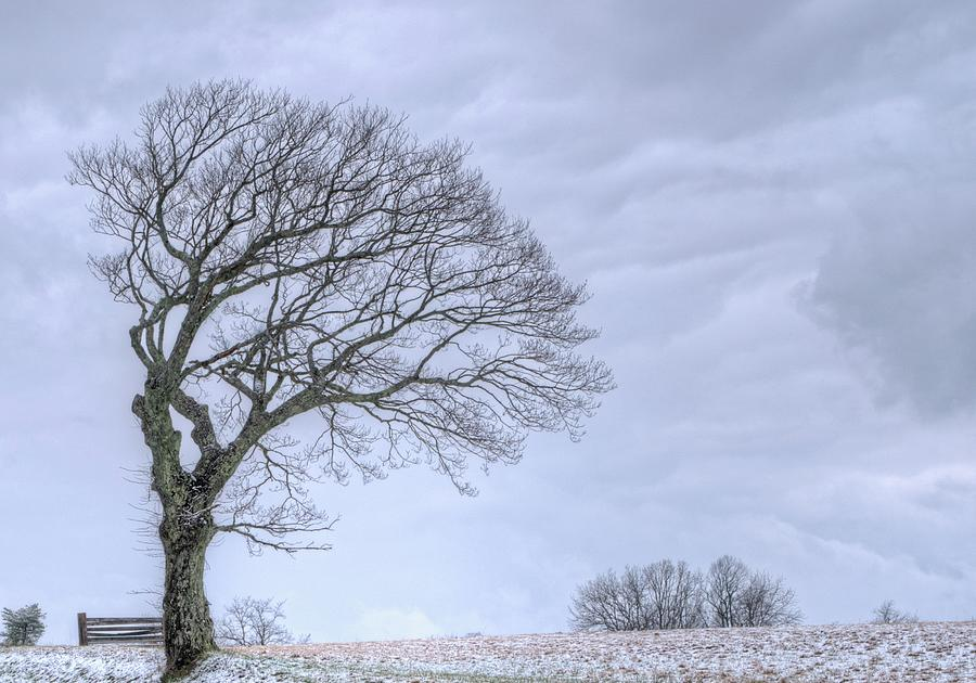 Windswept Tree Against A Grey Sky 2 Photograph
