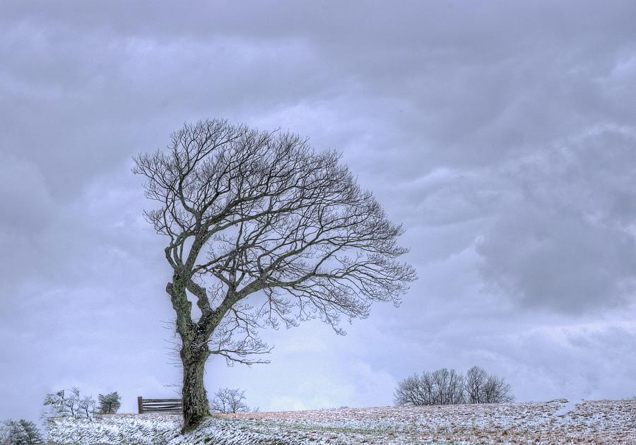 Windswept Tree Against A Grey Sky Photograph