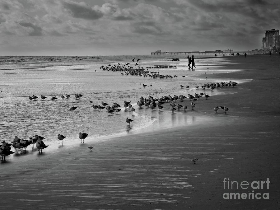 Beaches Photograph - Windy Beach by Steven Norris