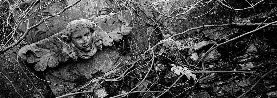 Winged Cherub In The Undergrowth Photograph