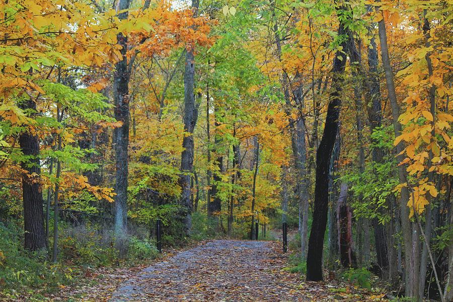 Winona Lake Trails Photograph