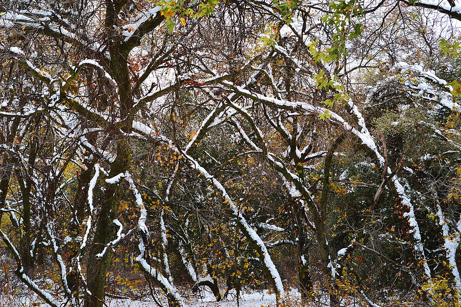 Winter Abstract Two by Glenn McCarthy Art and Photography