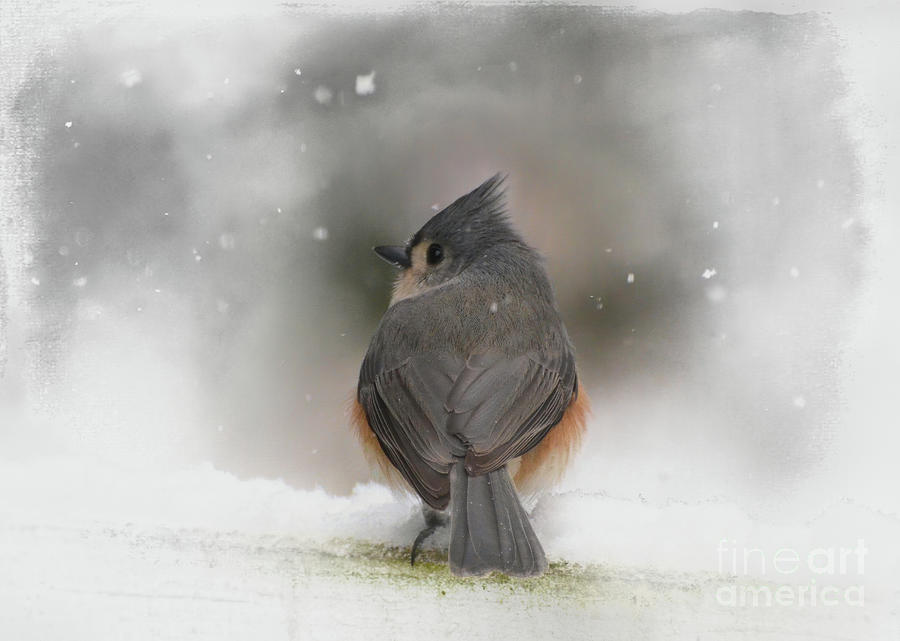 Winter Art - Tufted Titmouse In The Snow Photograph