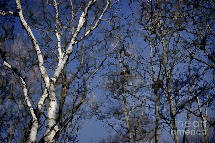 winter birch by AnnMarie Parson-McNamara