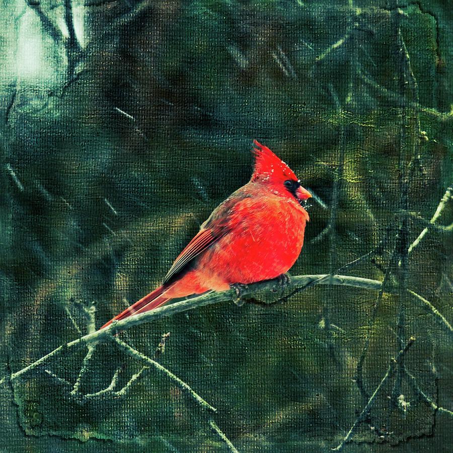 Winter Cardinal Songbird - Enhanced Photograph