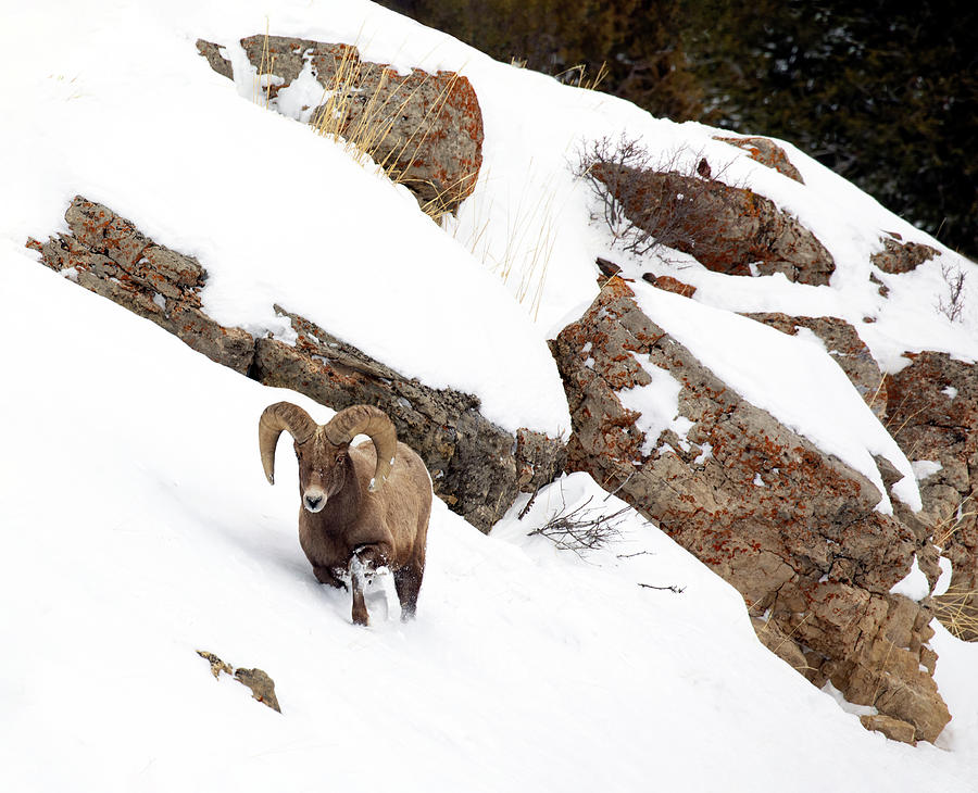 Winter Cliff Traverse by Art Cole