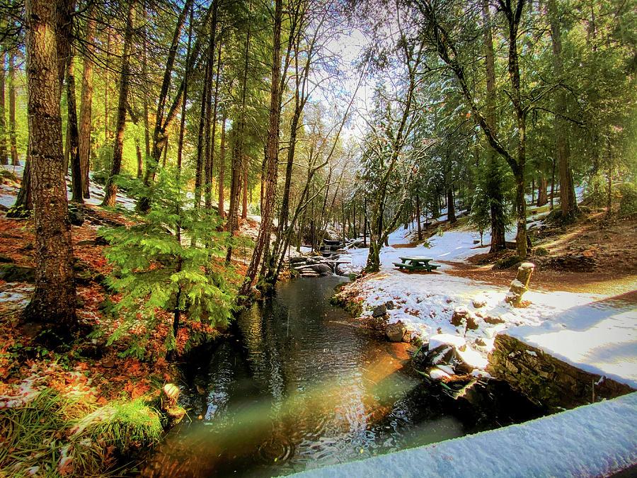 Winter Creek by Steph Gabler