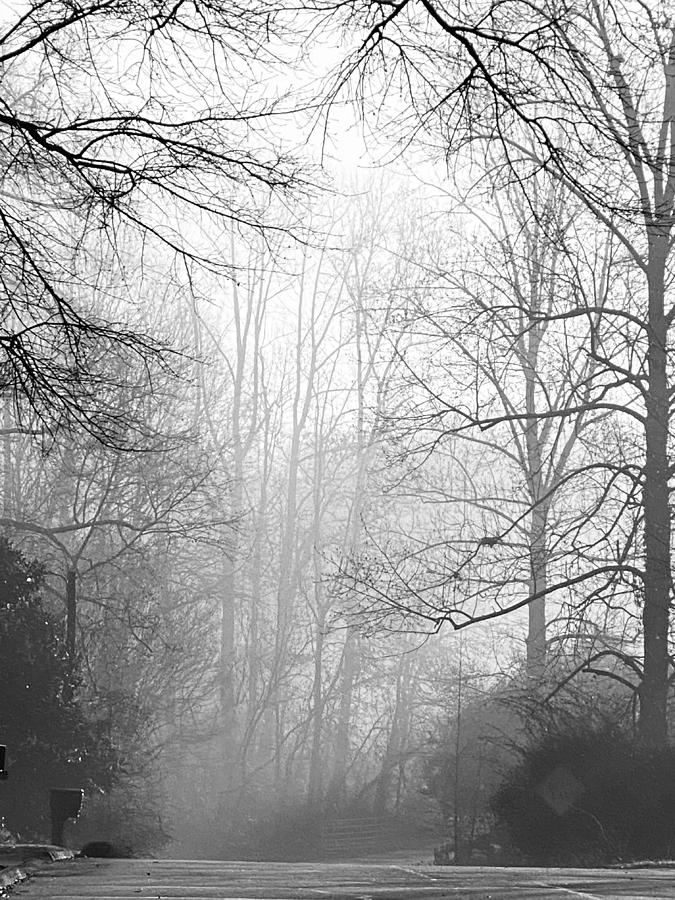 Trees Photograph - Winter Dawn by Greg Joens