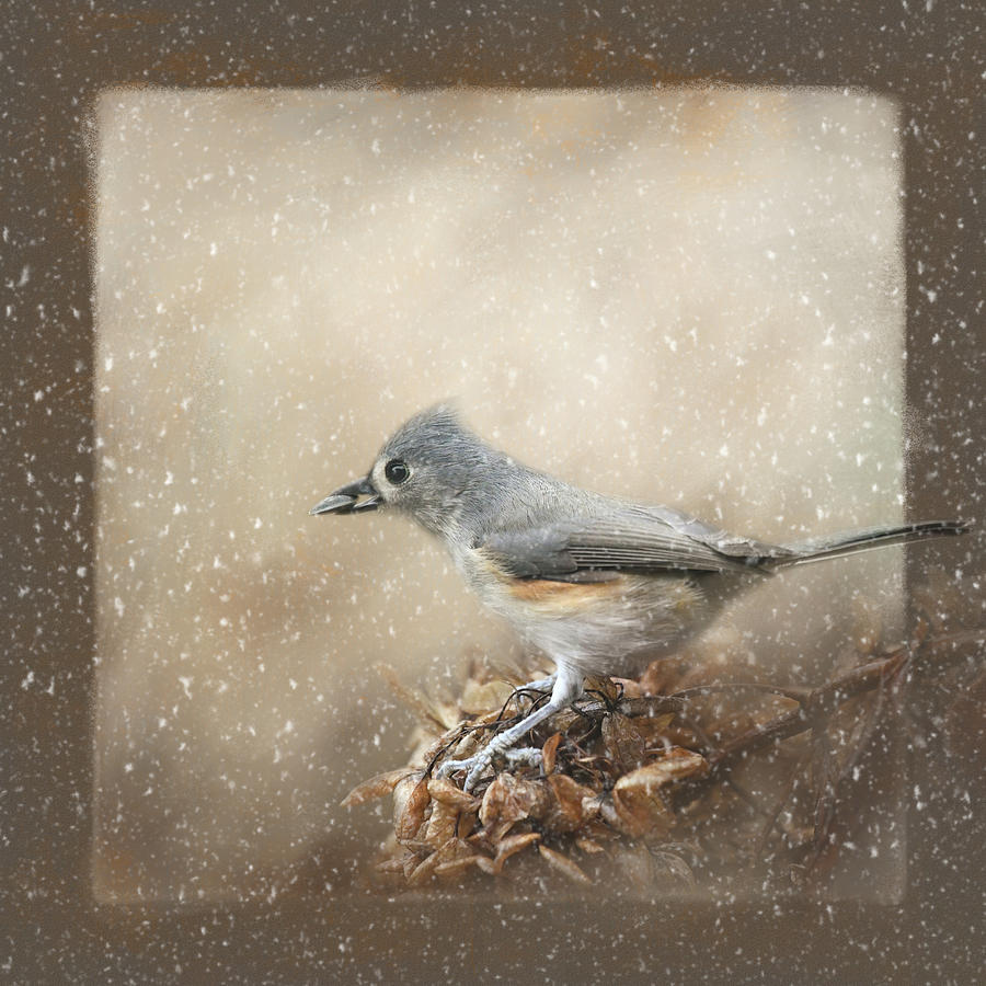 Winter Gathering by Jai Johnson