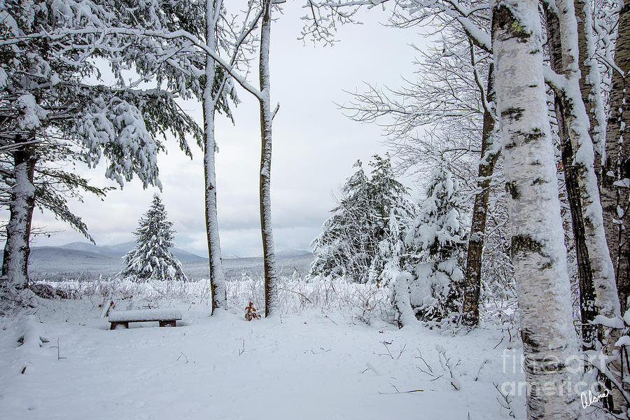 Winter Has Arrived by Alana Ranney