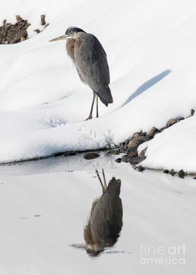 Winter Heron by Mike Dawson