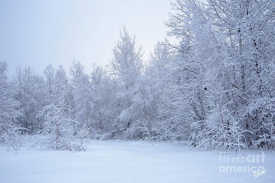 Winter in Maine by Alana Ranney