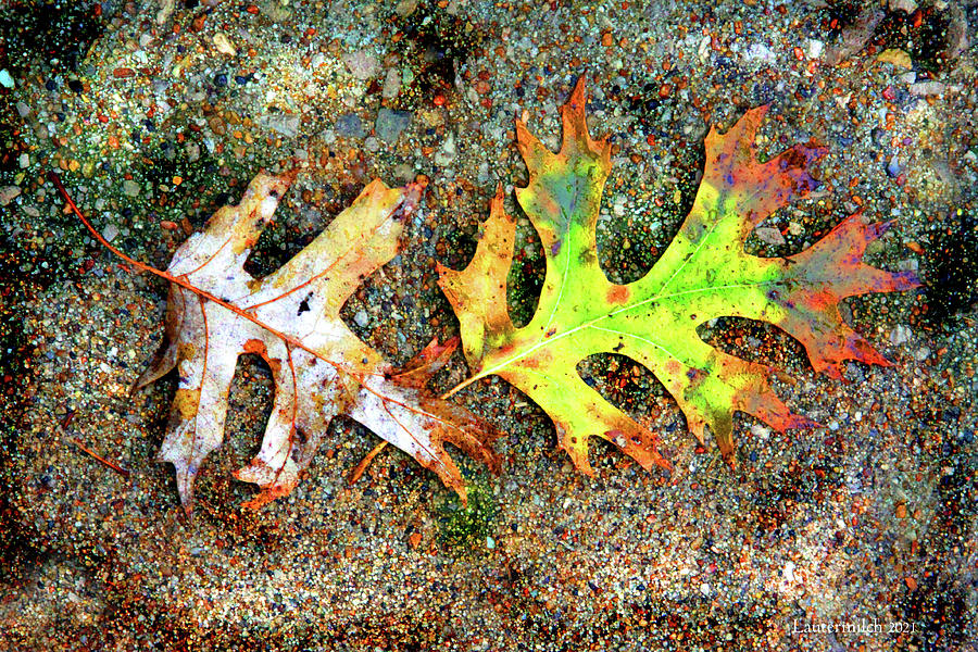 Autumn Leaves Photograph - Winter Leaves by John Lautermilch