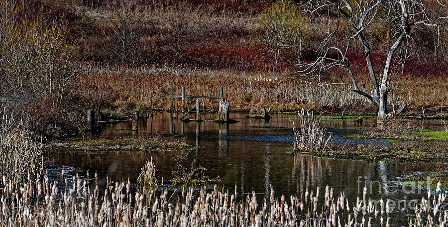 Winter Marsh Photograph