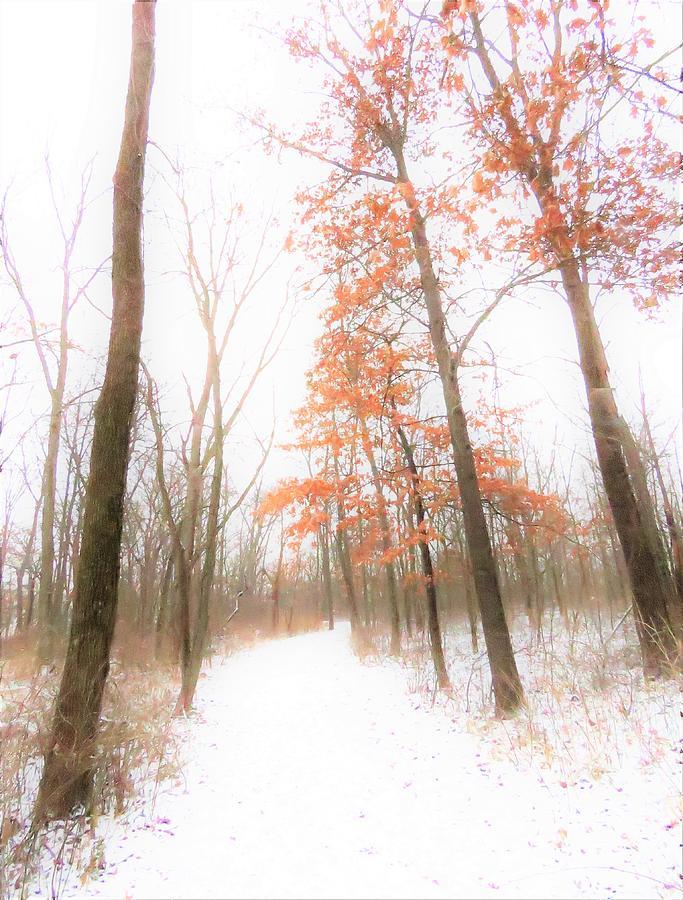 winter morning  by Lori Frisch