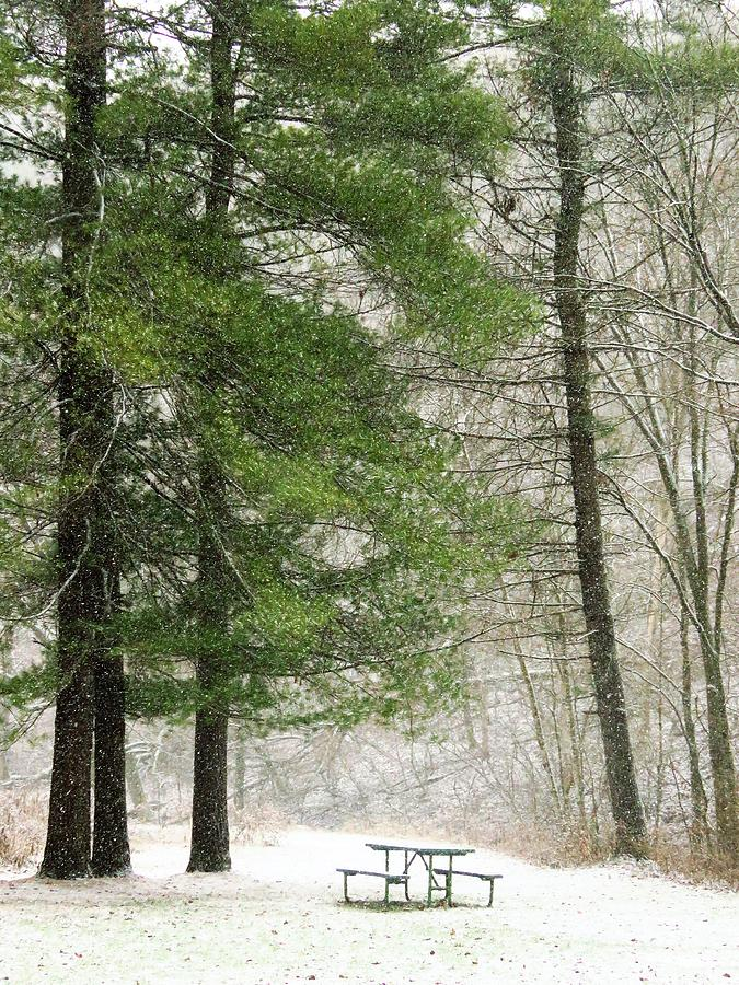 Winter Picnic by Lori Frisch
