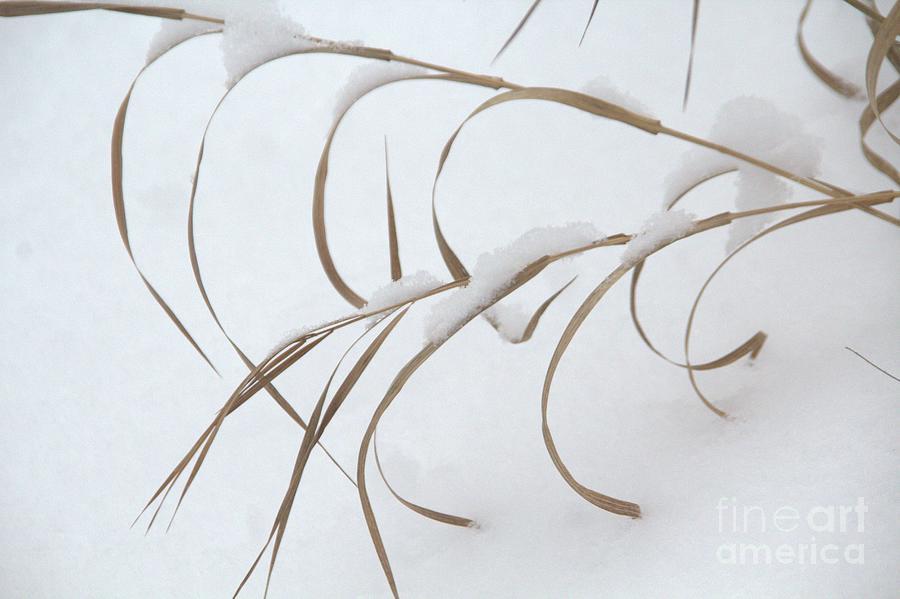 Grass Photograph - Winter Reach by Roland Stanke