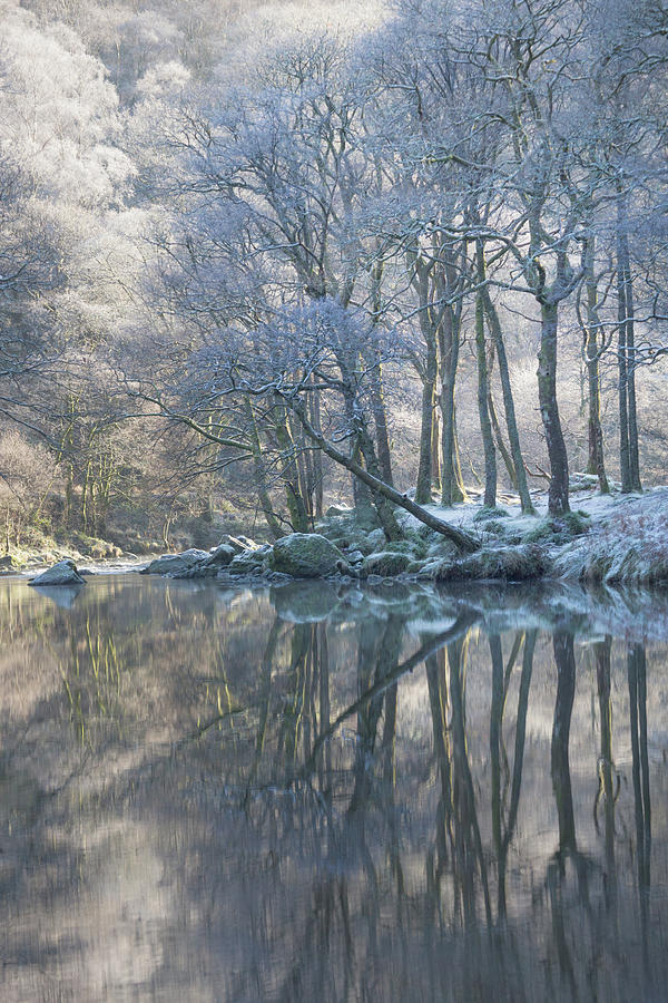 Winter Reflections by Anita Nicholson