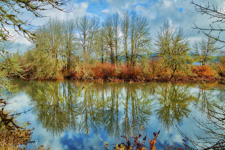 Tree Photograph - Winter Reflections by Loyd Towe Photography