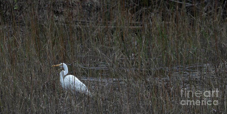 Winter Salt Marsh - Egret Photograph
