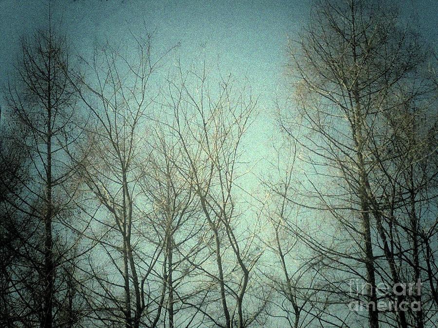 Winter by Sandy Gabriel