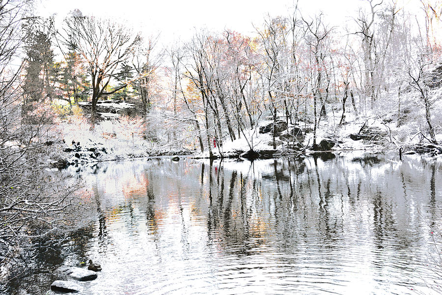 New York City Winter Photograph - Winter Simplicity Central Park Iv by Regina Geoghan