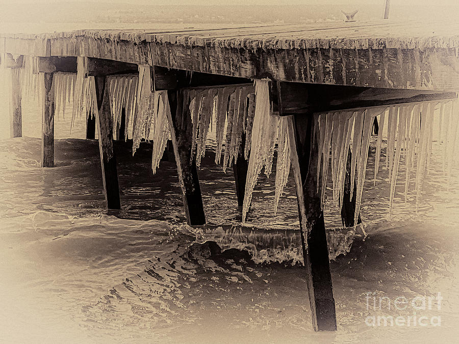 Dock Photograph - Winter Spikes by William Norton