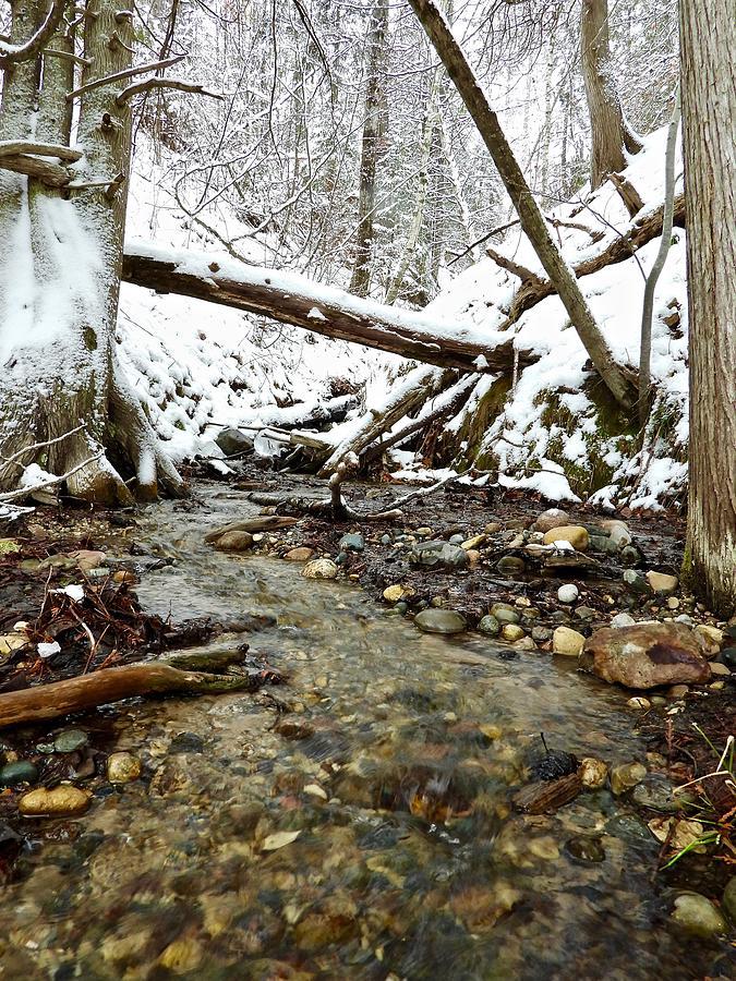 Winter Stream 5039 Photograph