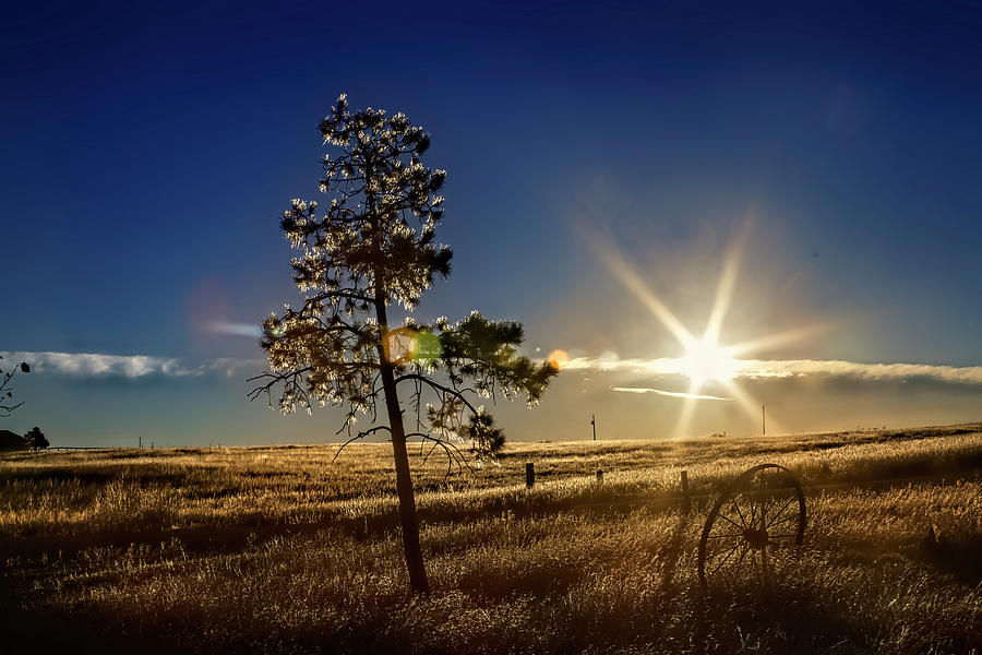 Landscape Photograph - Winter Sun by Alana Thrower