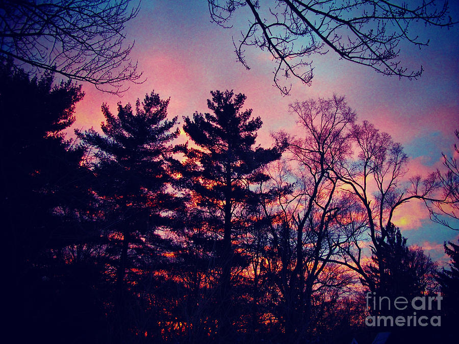 Nature Photograph - Winter Sunrise Through Silhouetted Pines by Frank J Casella