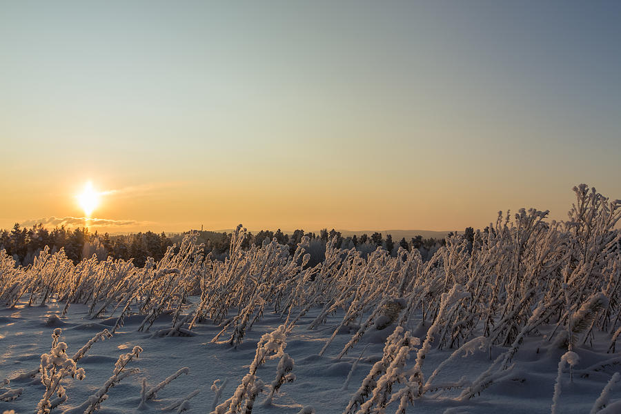Winter sunset in Finland Photograph by Sami Hurmerinta