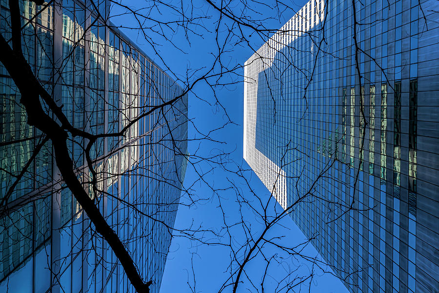 Winter Trees and Glass Architecture by Robert Ullmann