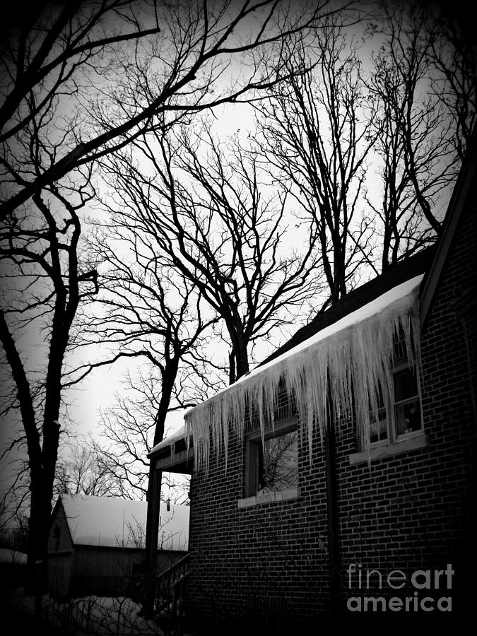 Documentary Photograph - Winter Trees and Icicles - Holga Effect by Frank J Casella