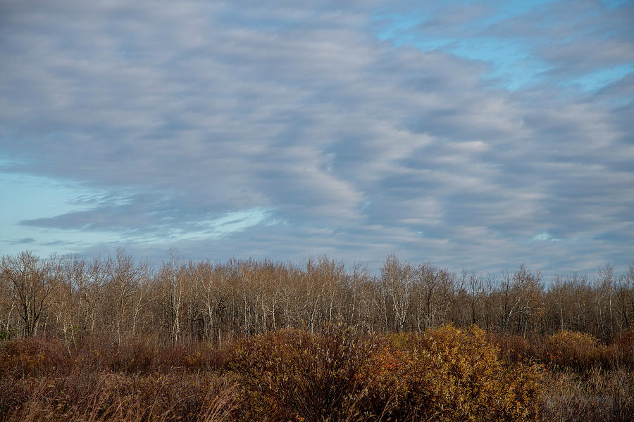 Winter Trees Manitoba by Mark Hunter