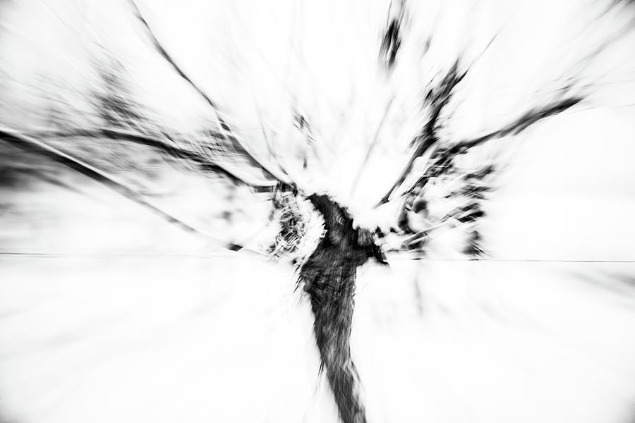 Vine Photograph - Powerful Winter Vine Rheinhessen by Marion Rockstroh-Kruft