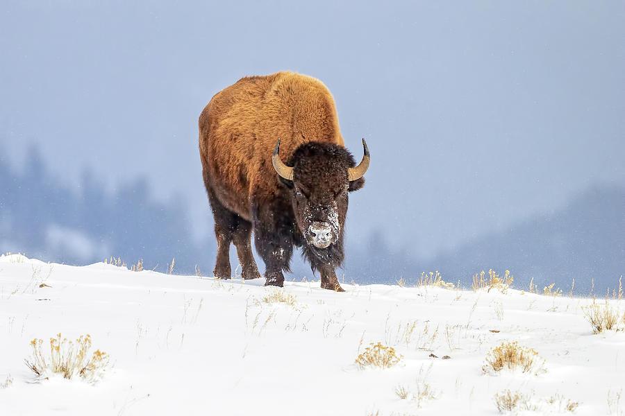 Winter Warrior Photograph