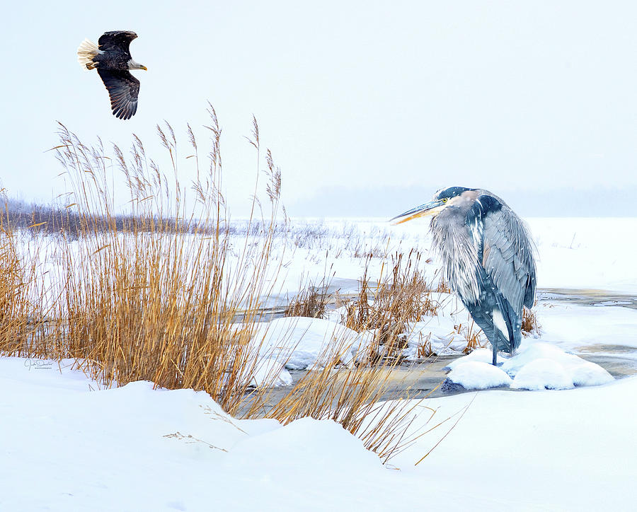 Winter Wildlife Scene by Judi Dressler