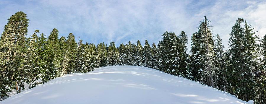 Winter Wonderland 3 Photograph