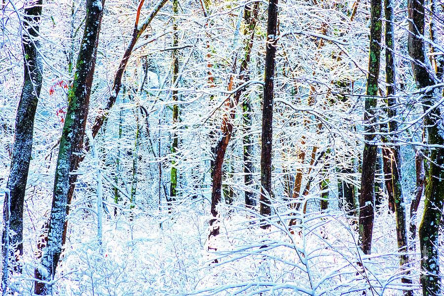 Winter Wonderland Abstract by Anita Pollak