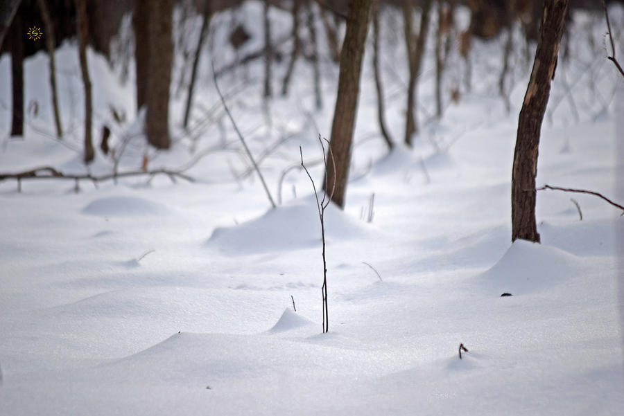 Winter Woods Waiting Photograph by Staci Grimes